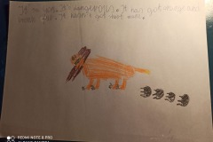 kacper-kot-zwierzatko