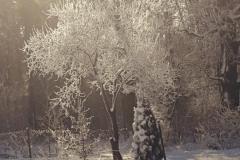 Aleksandra-Fiedor-kl-7b